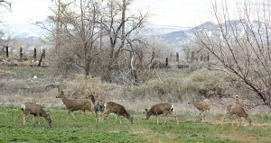 Sometimes deer like these in my field decide to come closer to the house and snack in my garden.